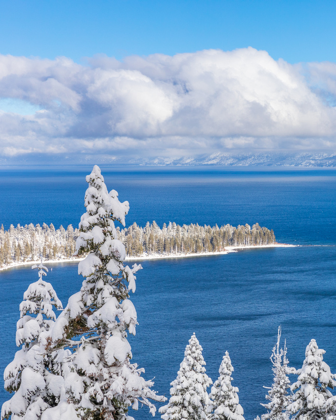 Snow Covered Pine over Lake Tahoe and Emerald Bay